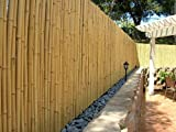 DE-COmmerce Hochwertiger Garten Zaun Sichtschutz Bambus ATY Nature I Garten, Terrasse, Balkon Sichtschutz Bambus mit geschlossenen Rohren I Windschutz Bambus (HxB) 180 cm x 180 cm