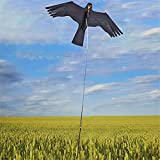 Zaizhan Lenkdrachen, Vogelscheuche, fliegende Drachen, Adler, Vogelscheuche, Vogelscheuche, Falken, Vogelabwehr, Komet, Taubenabwehr